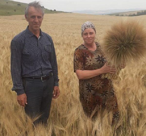 Специалисты Филиала ФГБУ «Россельхозцентр» по Республике Ингушетия  проводят работу по полевой апробации сортовых посевов. Работа эта проводится, в частности, в сельскохозяйственных предприятиях Сунженского района.