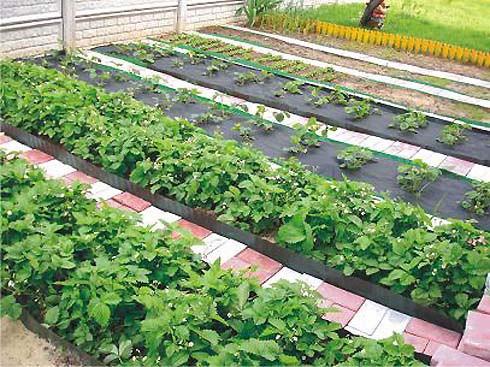 Напоминаем что по Республике проходит конкурс «Лучшее подсобное хозяйство Республики Ингушетия»