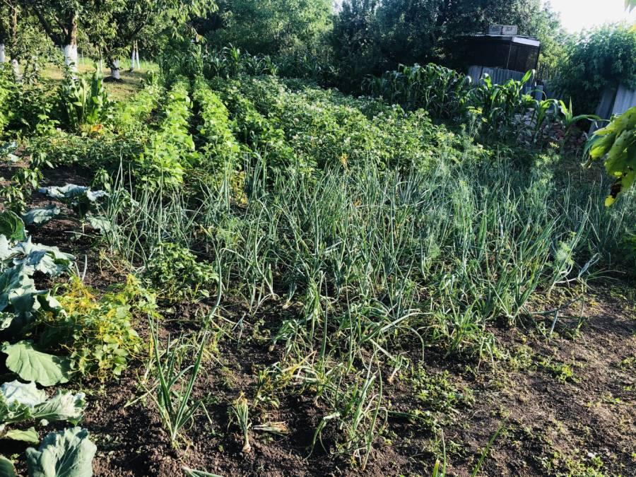 Спешим напомнить, что до окончания приема заявок на конкурс среди жителей региона, практикующих натуральное производство на своих садово-огородных участках и в личных подсобных хозяйствах, остается только один день!
