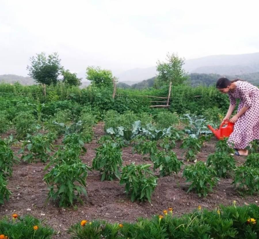 Сразу две жительницы Сунженского района стали победителями впервые проведённого в республике конкурса на лучшее личное подсобное хозяйство Ингушетии, инициированный Главой республики