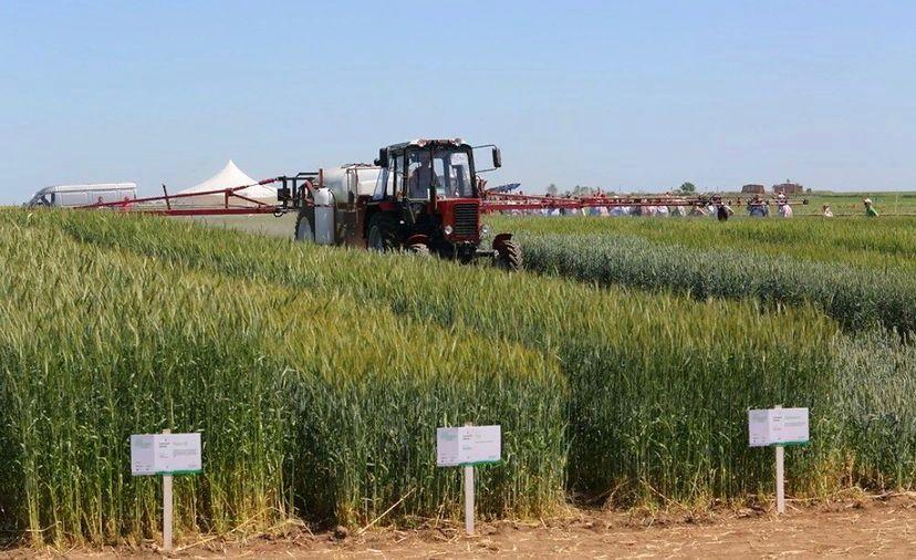 Ингушский РСЦ провел в Берд-юрте закладку опытных участков для апробации 6 сортов пшеницы отечественной селекции